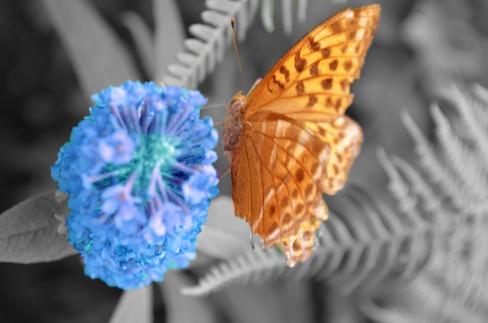 butterflycolour-adjust-1